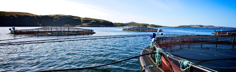 Finfish aquaculture sector plan