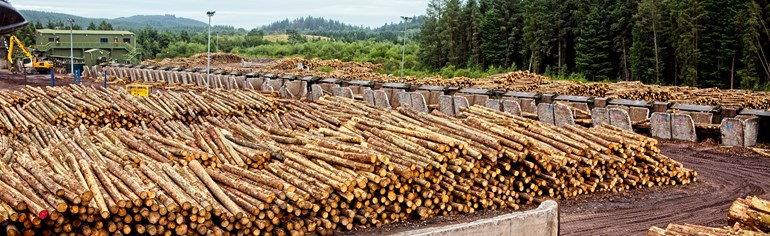 Forestry and timber production and processing sector plan