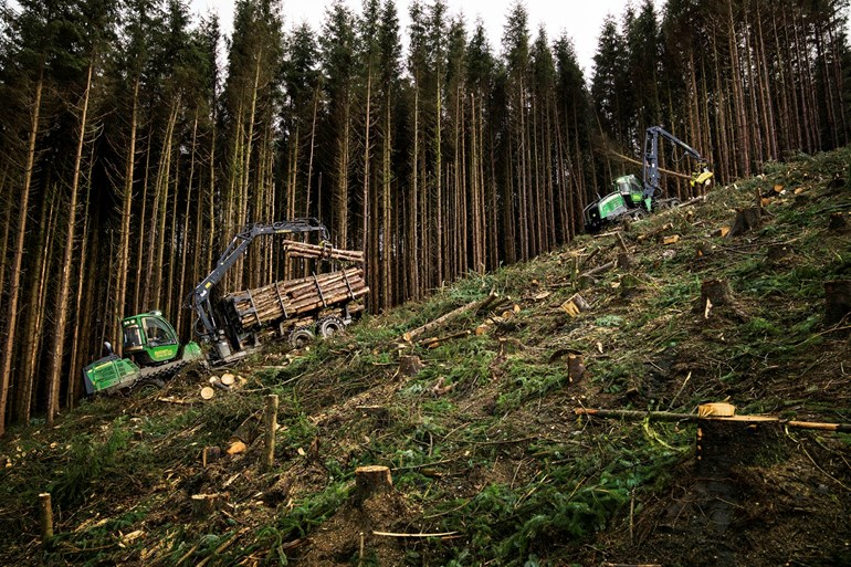 Forestry and wood processing sector plan